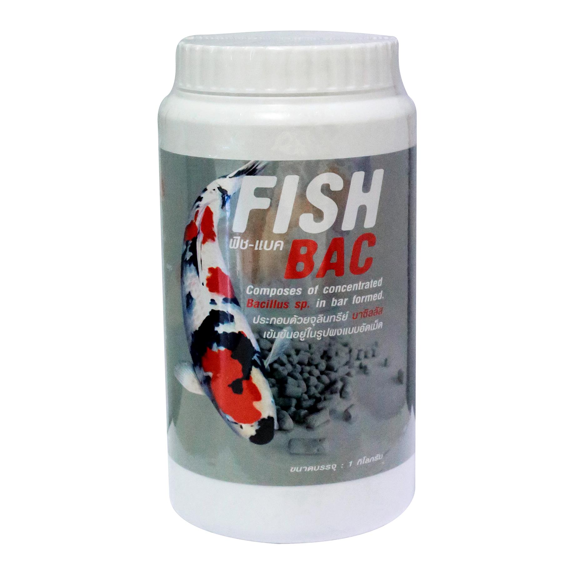 FISH BAC BACILLUS SP